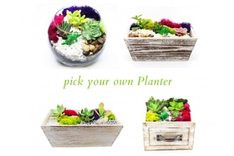 Plant Nite: Pick Your Own Planter