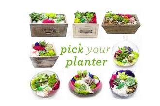All Ages Plant Nite:Pick Your Planter- Succulent