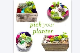 Plant Nite: Succulent Terrarium in Glass or Wood