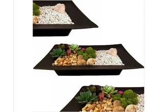 Plant Nite: Rose Quartz Succulent Garden in Black Tray