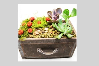 Plant Nite: Pumpkin Patch Succulents in Rustic Drawer