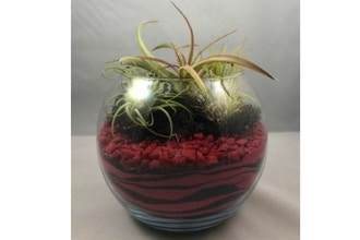 Plant Nite: Red/Black Sand Art With Air Plants