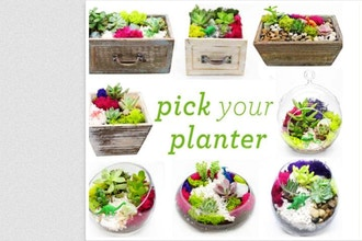 Plant Nite:Pick Your Planter! Succulent w/ Wood & Glass