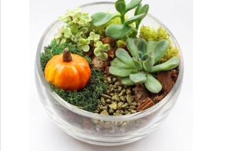 Plant Nite Succulents In Slope Bowl With Fall Pumpkin Terrarium
