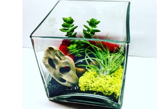 All Ages Plant Nite: Square Glass Driftwood Terrarium
