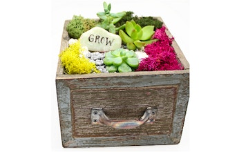Plant Nite: Succulent Terrarium in Square Wooden Drawer