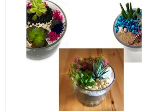 Plant Nite: Succulent Garden in Glass Cylinder