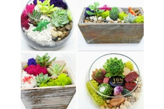 Plant Nite: Succulent Garden in Wood Box or Glass