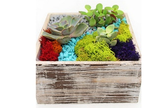 Plant Nite: Succulent Terrarium in Distressed Wood 7