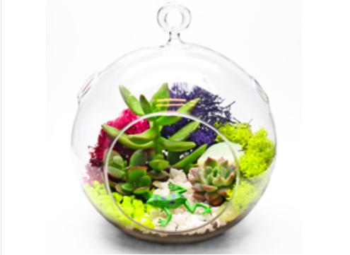 Plant Nite Succulent Terrarium In Hanging Glass Globe Terrarium