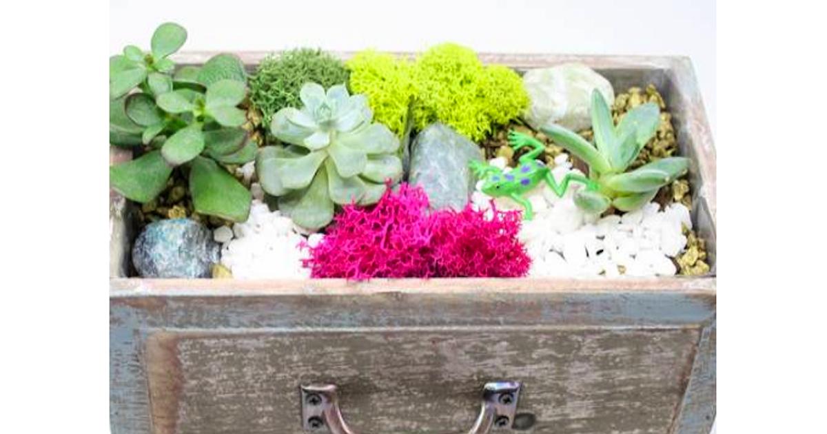 Plant Nite Succulent Terrarium In Wooden Drawer Terrarium Classes