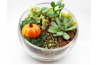 Plant Nite: Succulents in Slope Bowl with Fall Pumpkin