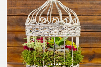 Plant Nite: Succulents in White Iron Birdcage