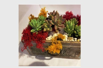 Plant Nite: Succulents in a Drawer