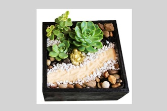 Plant Nite: The Path to Buddha Zen Garden