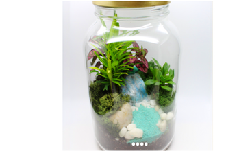 Plant Nite: Tropical Foliage Terrarium in a Jar