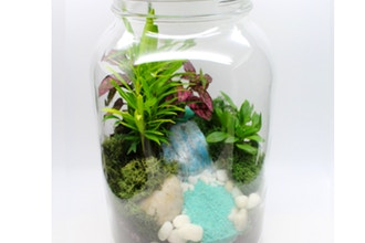 Plant Nite: Tropical Terrarium in Glass Jar (Ages 13+)