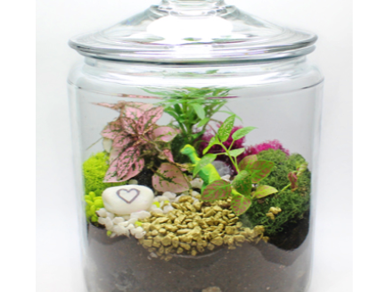All Ages Plant Nite Tropical Terrarium Apothecary Jar Terrarium
