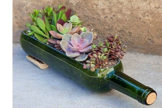 Plant Nite: Wine Bottle Succulent Planter (Ages 13+)