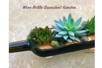 Plant Nite:  Succulent Wine Bottle