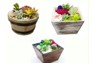 Plant Nite: Wood & Barrel Mashup