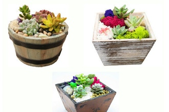 All Ages Plant Nite: Wood & Barrel Mashup