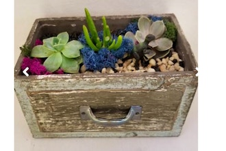 Plant Nite: Wooden Drawer with Succulents