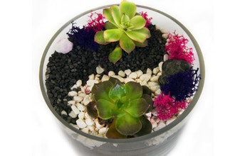 Plant Nite: Yin Yang Succulents in Glass Cylinder