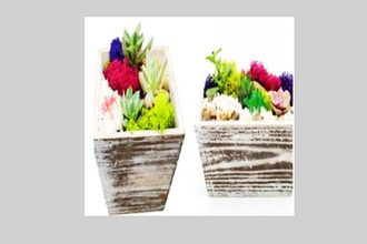 Plant Nite: You Pick Wooden Box or Rectangle