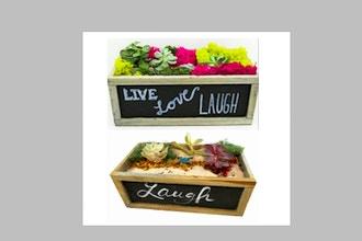 Plant Nite: Succulent Garden in Chalkboard Wood Box