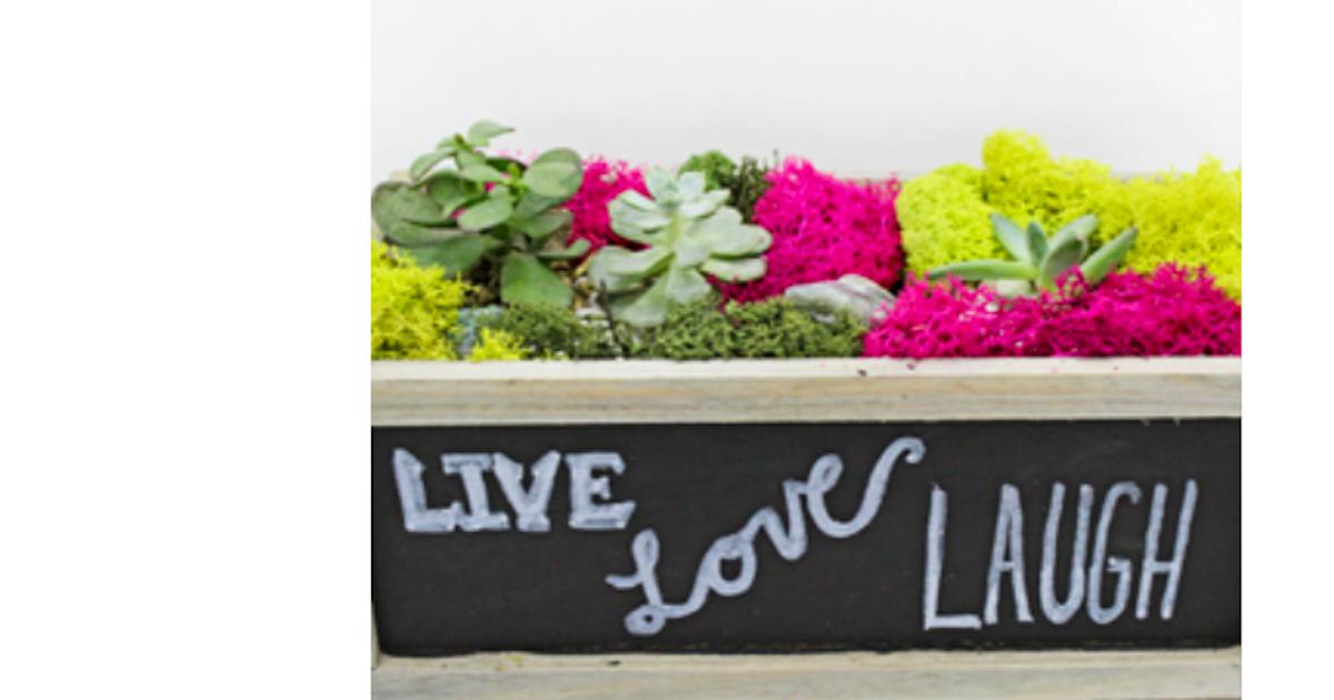 Plant Nite Succulent Garden In Chalkboard Planter Terrarium