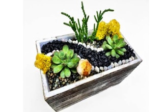 Plant Nite: Distressed Wood Succulent w Citrine Crystal