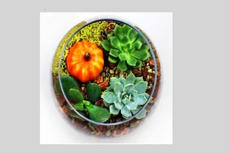 Plant Nite: Succulents in Rose Bowl with Fall Pumpkin