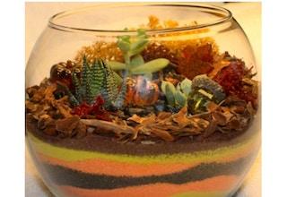 Plant Nite: Fall Sand Art - Terrarium Classes San Jose | CourseHorse -  Yaymaker