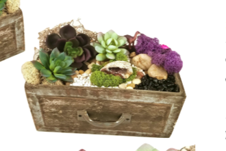 Plant Nite: Geode Crystal in Rustic Wooden Drawer
