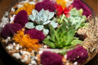 Plant Nite Succulent Terrarium In Glass Lily Bowl Terrarium Classes