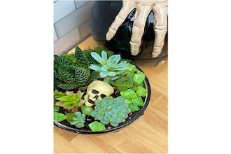 Virtual Plant Nite: Jack Skeleton Terrarium (Ages 13+)