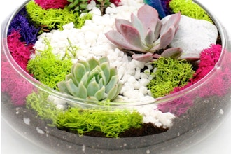Plant Nite: Succulent Garden in Glass Lily Bowl