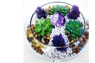 Plant Nite: Glass Lily Bowl Succulent Terrarium with...