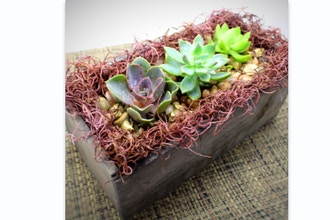 Plant Nite: Moss Love