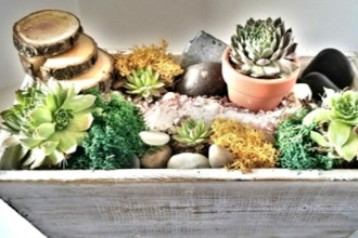Plant Nite:
