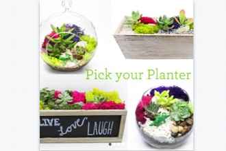 All Ages Plant Nite: Pick Your Planter w/ Glass or Wood