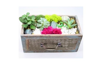 Plant Nite: Rustic Drawers