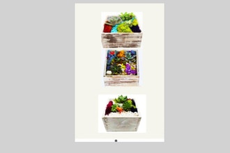 All Ages Plant Nite: White Square Wooden Box