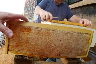 Bee Keeping Prep. Workshop