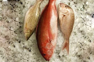 Fish 101: Butchery + Preparation