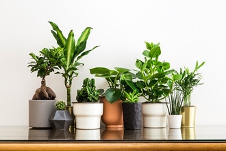 How to Love Houseplants: Caring for Indoor Plants
