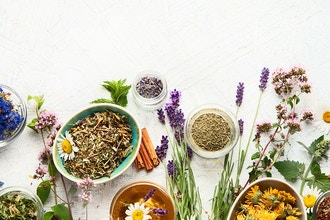 Herbal Allies for Immune Support - Online