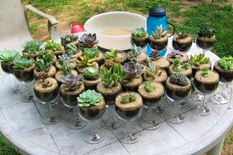 Plant Party – Build Your Own Terrarium