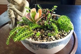 Succulent Arranging and Care
